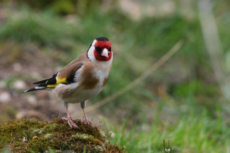 Oiseau du jardin par jean pierre rochette sur l 39 internaute for Oiseau decoratif jardin