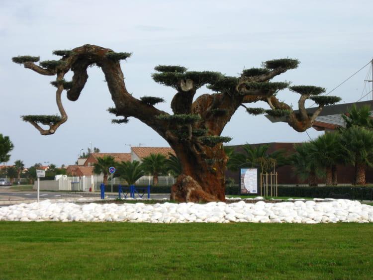 Olivier tricentenaire bonsai par catherine guillier sur l 39 internaute - Periode de taille olivier ...