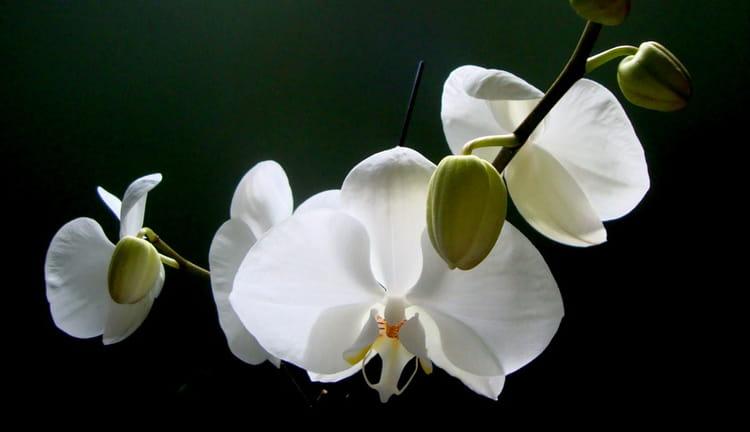 Célèbre Orchidée Blanche par Ana Ribeiro sur L'Internaute JK61