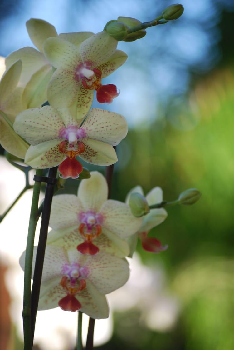 orchid e phalaenopsis par genevieve lapoux sur l 39 internaute. Black Bedroom Furniture Sets. Home Design Ideas