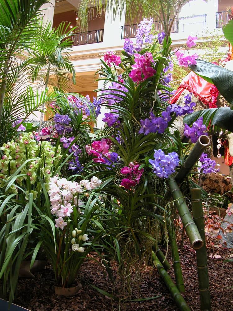 orchid e vanda par daniel vernhet sur l 39 internaute. Black Bedroom Furniture Sets. Home Design Ideas
