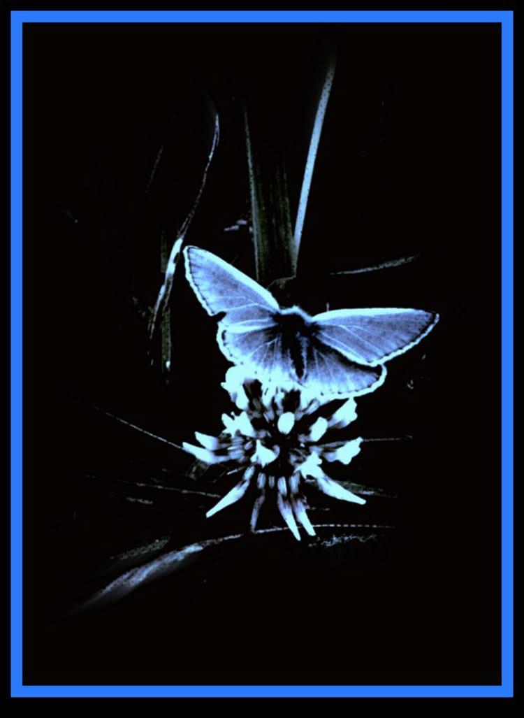 Papillon de nuit par marie paule quiviger sur l 39 internaute - Gros papillon de nuit dangereux ...