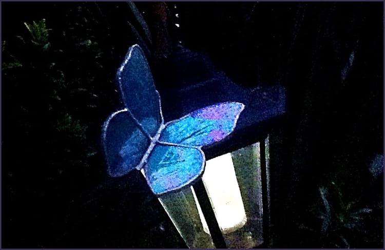Papillon de nuit par els de flander sur l 39 internaute - Gros papillon de nuit dangereux ...
