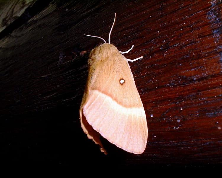Papillon de nuit par franck landais sur l 39 internaute - Signification papillon de nuit ...