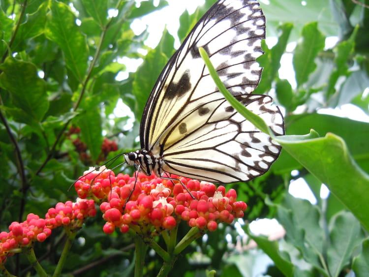 Papillon et fleur par monique domeniconi sur l 39 internaute - Image papillon et fleur ...