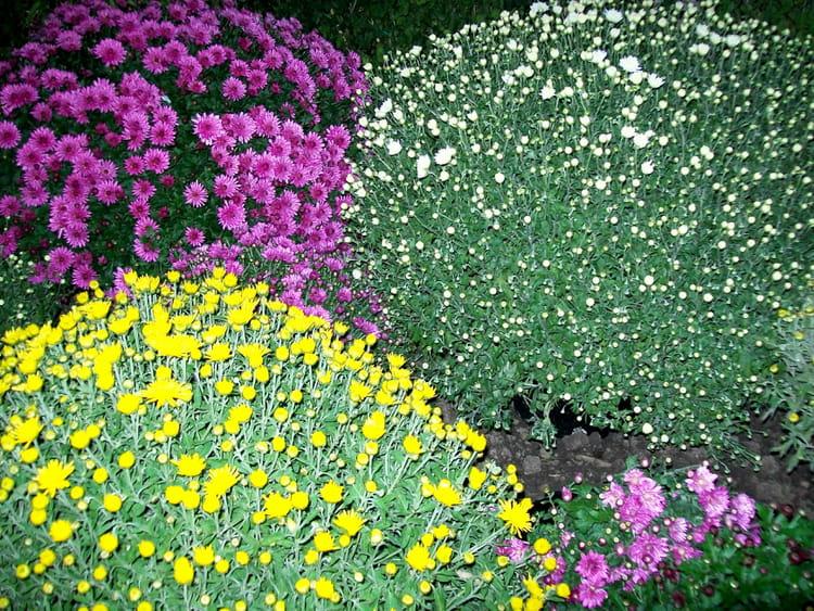 parterre de fleurs par cypora herszhorn sur l 39 internaute. Black Bedroom Furniture Sets. Home Design Ideas