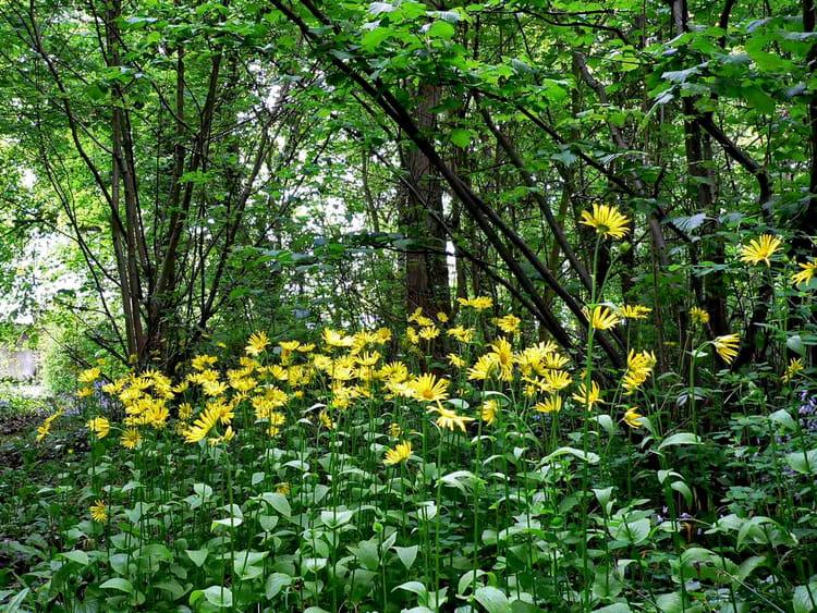 Parterre de fleurs en sousbois par Christian Rault sur L  ~ Fleurs Des Bois