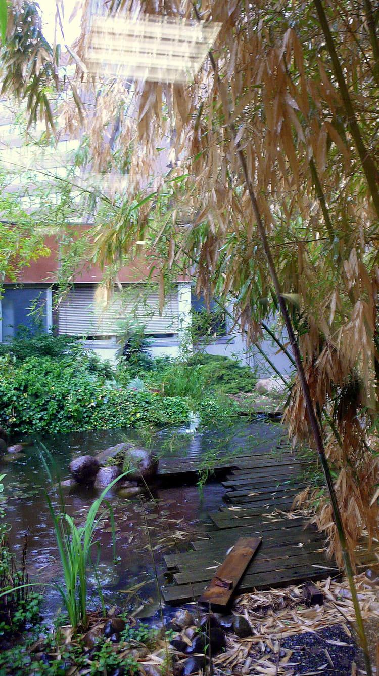 Petit jardin int rieur par catherine burg sur l 39 internaute for Petit jardin interieur