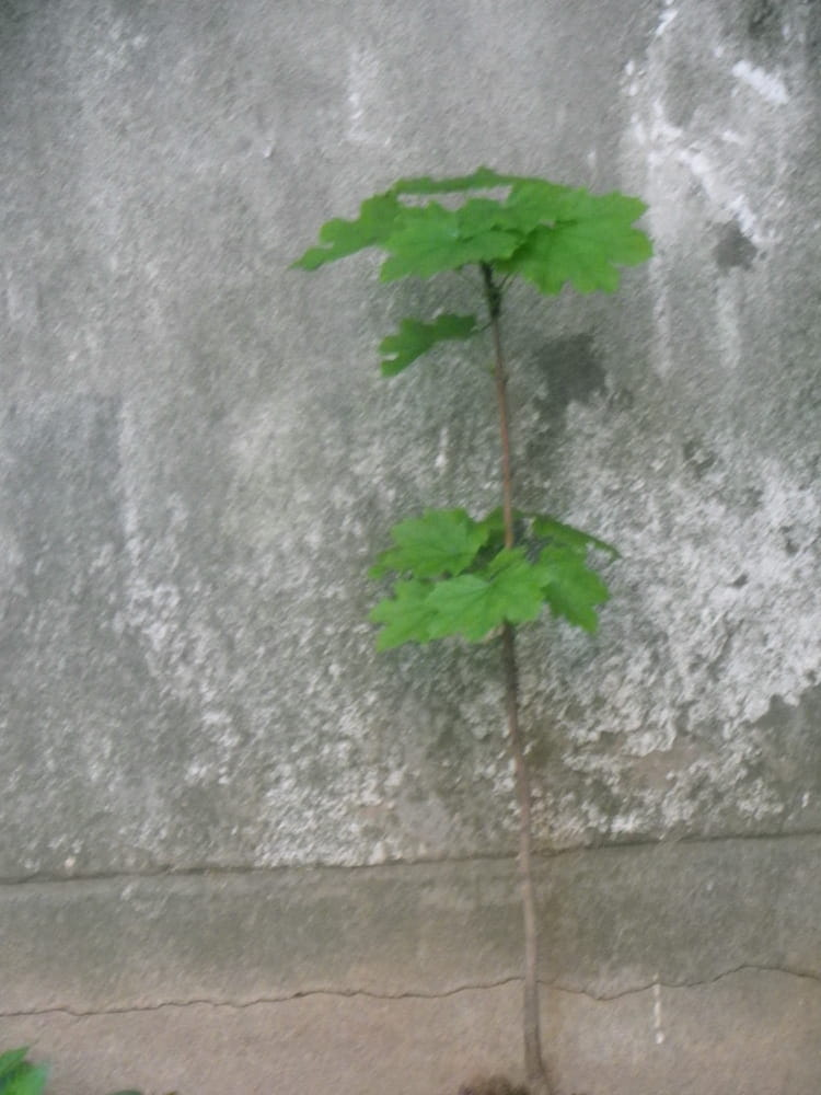 petite plante proche d 39 un mur par isabelle taras sur l. Black Bedroom Furniture Sets. Home Design Ideas