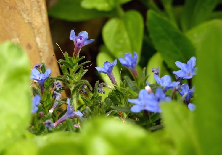 petites fleurs bleues par ga tane delourme sur l 39 internaute. Black Bedroom Furniture Sets. Home Design Ideas