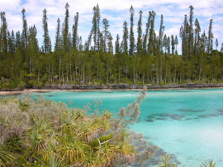 Piscine naturelle ile des pins par lucie gautier sur l for Petite piscine naturelle
