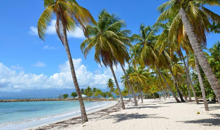 Plage et palmiers par r my blang sur l 39 internaute - Image palmier ...