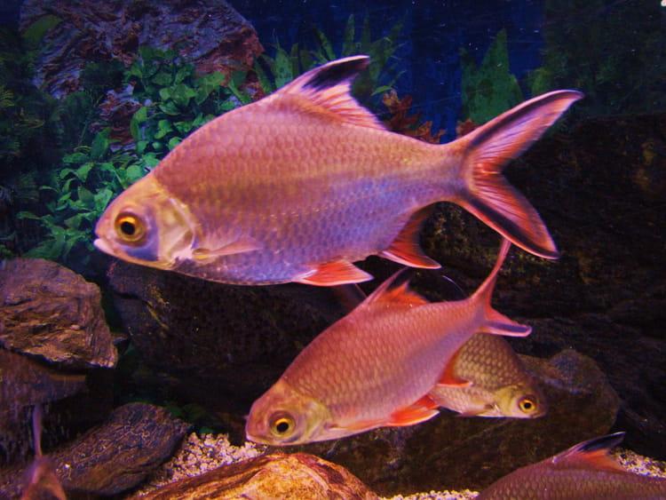 poissons exotiques d 39 aquarium par jean marc puech sur l 39 internaute. Black Bedroom Furniture Sets. Home Design Ideas