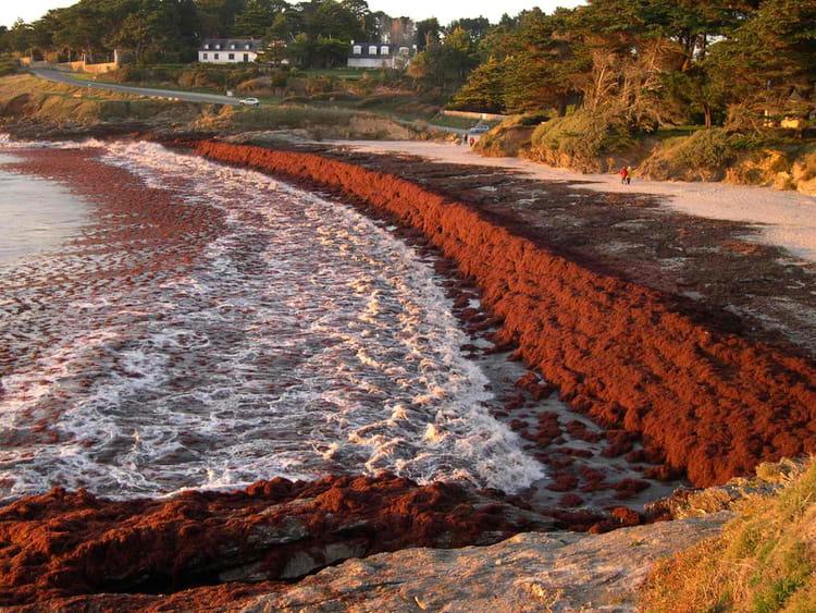 Soleil et algues rouges par l onard colombo sur l 39 internaute for Algues rouges piscine