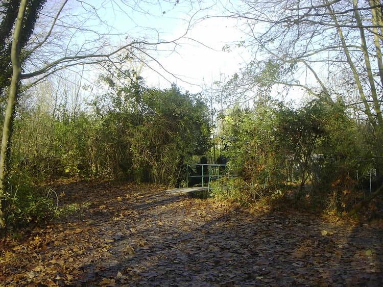 tapis de feuilles mortes par yves cotrel sur l internaute