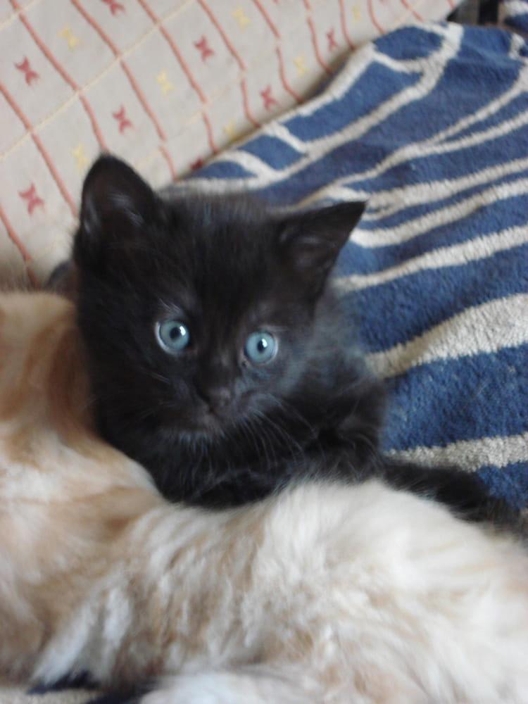 Trop mimi avec c est yeux bleu gris par monique no l sur l 39 internaute - Yeux gris bleu ...