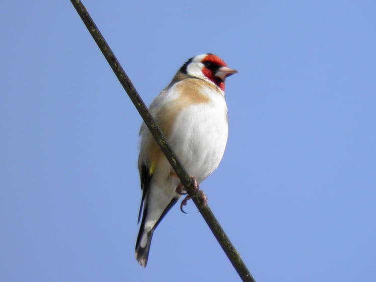 Un oiseau de nos jardin par jean poupkoff sur l 39 internaute for Oiseau decoratif jardin