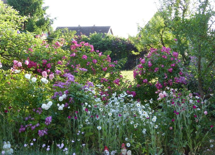 Un petit coin du jardin au mois de juin par jacqueline for Au coin du jardin montville