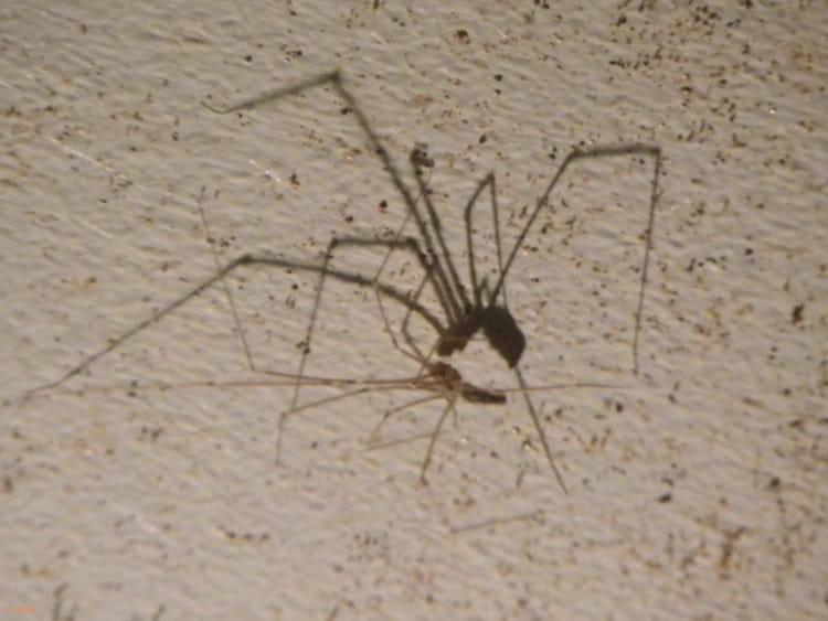 une araign e au plafond par isabelle taras sur l 39 internaute. Black Bedroom Furniture Sets. Home Design Ideas