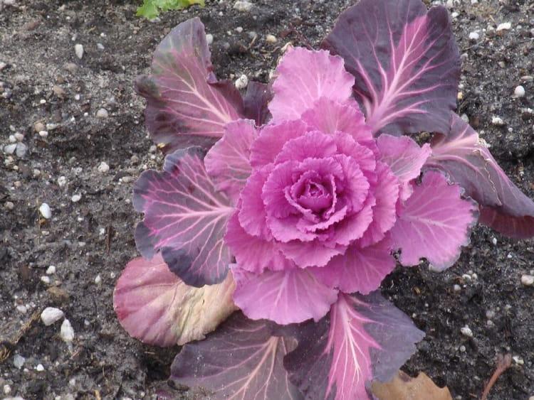Une Fleur Originale Par Isabelle Taras Sur L Internaute