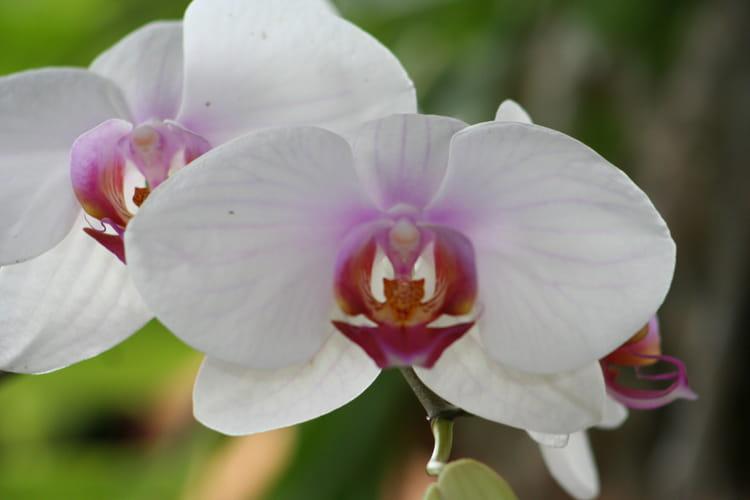une jolie fleur par vincent carré sur l'internaute